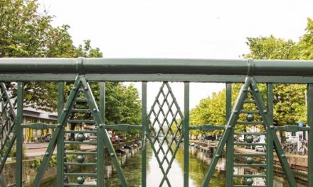 Uitspraak rechter: gemeente mag bomen Veenkade nog niet kappen