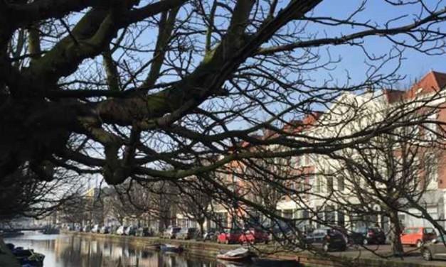 Bewoners winnen slag in strijd om bomen Veenkade