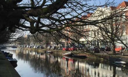 Rechter: gemeente mag bomen Veenkade nog niet kappen