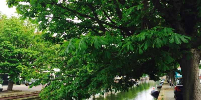 Gemeentenegeert oplossing  behoud bomen aan kades