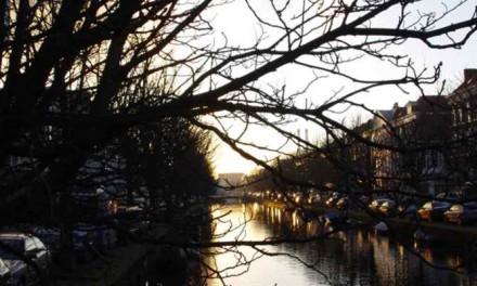 Update: onafhankelijk advies over bomen Veenkade