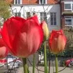 Straatverhalen: Klein maar fijn