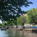 Bewoners verliezen rechtszaak bomen Veenkade