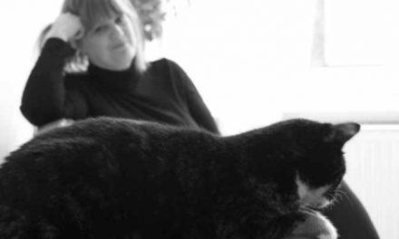 Haags kattencafé opent de deuren