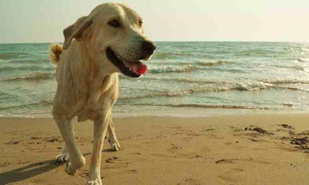 Strandfeest voor honden en hun baasjes