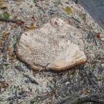 Video impressie vernietiging bomen Veenkade