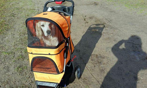 Rondje Hond: Samen met een karretje