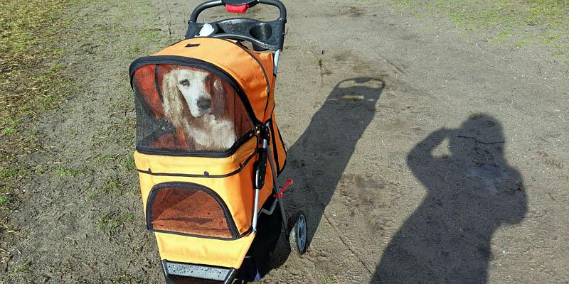 Hondenbuggy