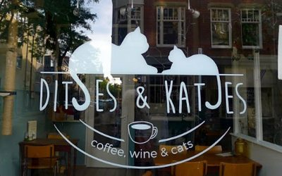 Local Heroes – Ditjes en Katjes