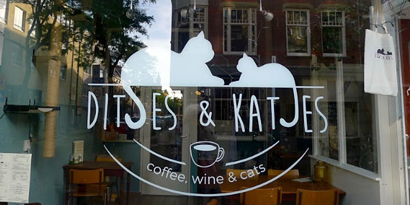 kattencafé Ditjes en Katjes