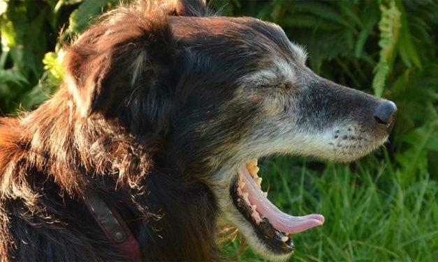 Rondje Hond: Gezeur