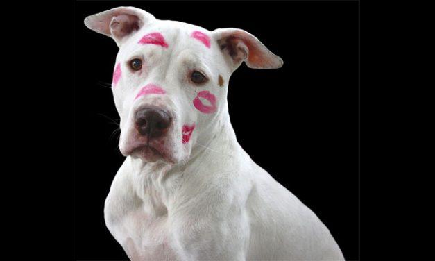 Rondje Hond: Judaskus & Verliefd…